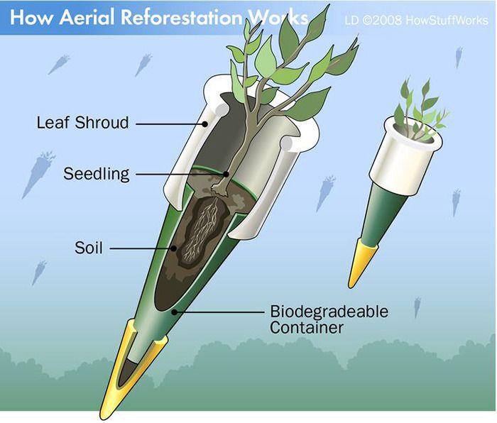 ایدهای جالب برای درختکاری و تجدید حیات جنگل ها به کمک پهپادها