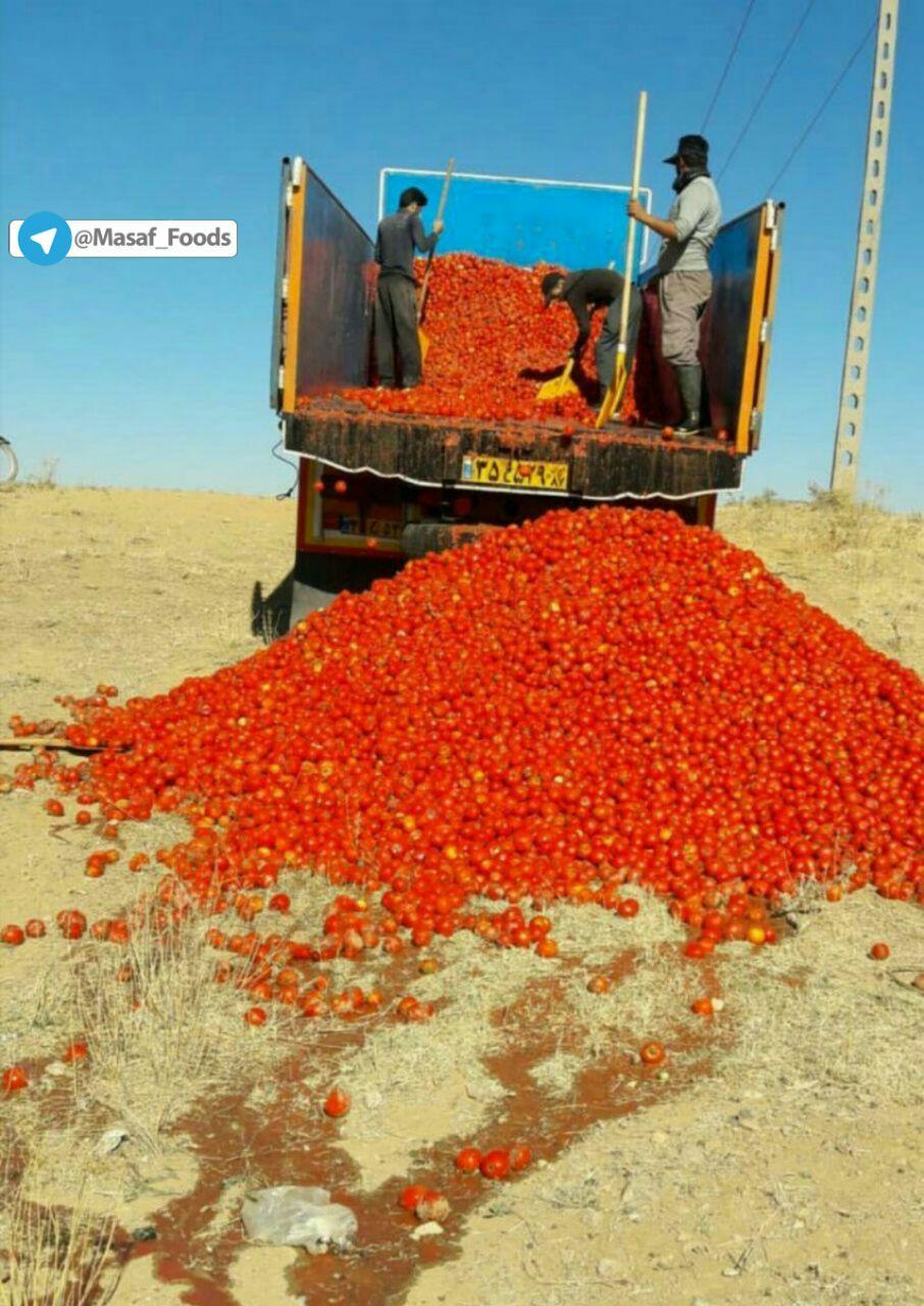 :کشاورزی که با تمام سختی ها در آخر محصولش را بدلیل عدم اطلاع از اقتصاد کشاورزی و مدیریت نامناسب در بیابان رها می کند....!