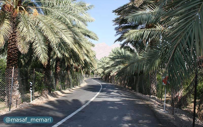 درختان مثمر در ایران   نخل در خیابانها و بلوارهای استانهای جنوبی و غربی مانند بوشهر و قصر شیرین