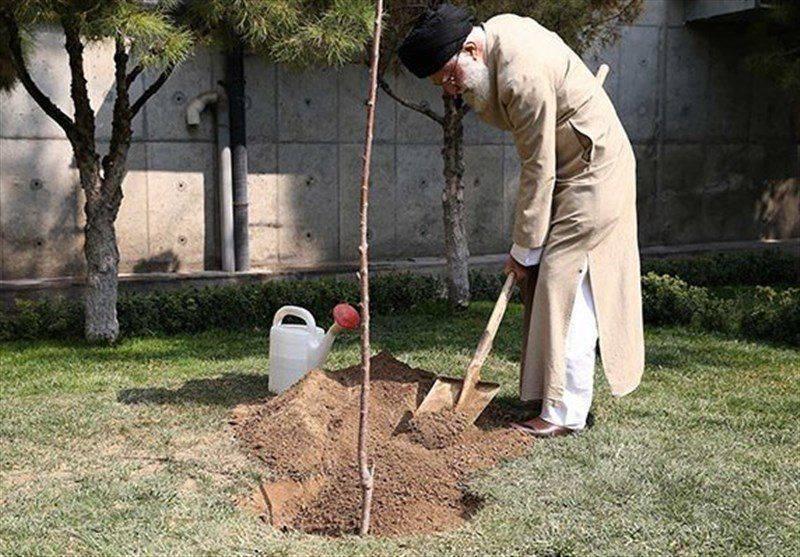 هر ایرانی یک درخت