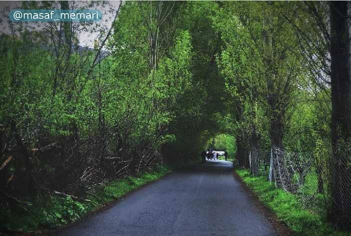 درختان مثمر در ایران | پارک میوه جنگلی مشکین شهر