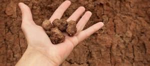 نکاتی درباره اصلاح خاک رسی و متراکم برای کاشت گل و گیاه