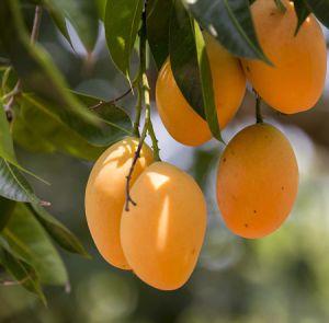پرورش درخت مناطق گرمسیری در حیاط خانه