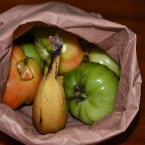 گر میوه های کال دارید