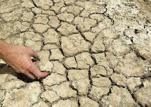 قلیایی شدن خاک