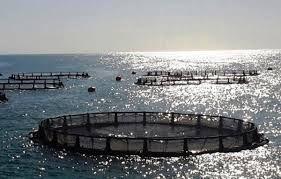 تصاویر زیبا از صنعت پرورش ماهی در قفس سواحل  نروژ