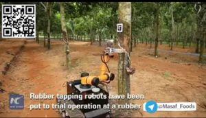 بهرهبرداری آزمایشی از رباتهای جمعآوری کائوچوی طبیعی