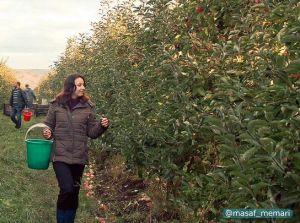 هجده میلیارد درخت میوه برای سیاره سالم