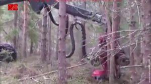 قطع درختان با استفاده از ربات
