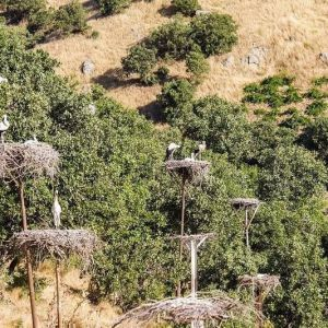 مردم مهربان دره تفی برای لک لک ها اشیانه درست کردند