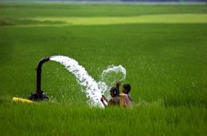 حمایت از تولید کشاورزی در هند