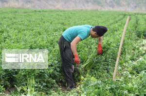 رونق کشاورزی خوزستان با بارندگی های اخیر