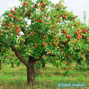 منافع زیست محیطی درختان میوه و گیاهان مزروعی