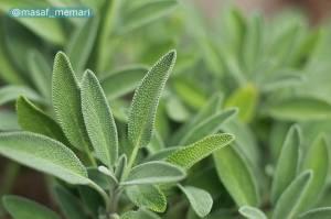استفاده از گیاهان دارویی در طراحی فضای سبز شهری | حفظ ژرم پلاسم گیاهان دارویی