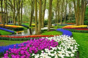 فصل جشنوارهی گل در هلند تحت تاثیر کرونا