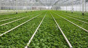 تأمین مالی کشاورزی هلند