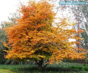 تنوع زراعت و درختان میوه در شهر   تنوع در خزان