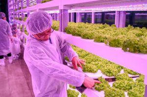 اهمیت کشاورزی  در کره
