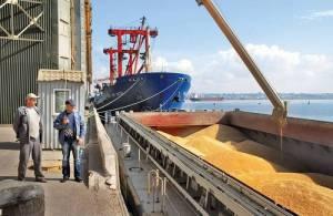 نخستین محموله گندمهای وارداتی از روسیه وارد بندر امیرآباد شد و در حال تخلیه است