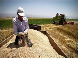 واردات ۳ میلیون تن گندم به کشور/ سطح زیر کشت گندم به ۶ میلیون هکتار کاهش یافت!