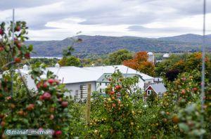 کاشت درختان میوه در اماکن عمومی شهر ونکوور کانادا