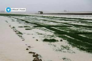 سیل موجب چه مشکلاتی در کشاورزی می شود؟