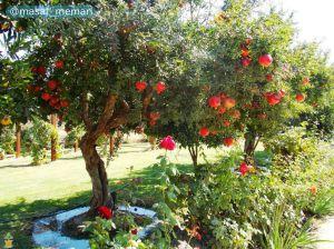 تنوع زراعت و درختان میوه | تنوع در گونه، طعم و مزه