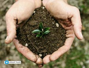 راهکاری ساده برای تشخیص اسیدی یا قلیایی بودن خاک گلدانها