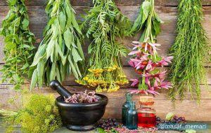 استفاده از گیاهان دارویی در طراحی شهری   ارائه خدمات بومشناختی توسط گیاهان دارویی