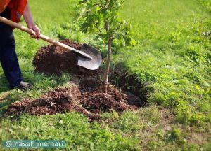 فضیلت درختکاری