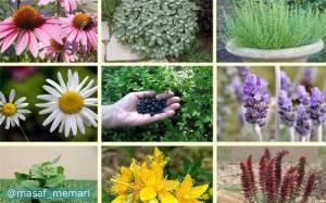 استفاده از گیاهان دارویی در طراحی فضای سبز شهری | زیبایی گیاهان دارویی