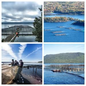 پرورش ماهی در قفس راهبرد آمریکا برای استفاده از ظرفیت آبهای درون سرزمینی