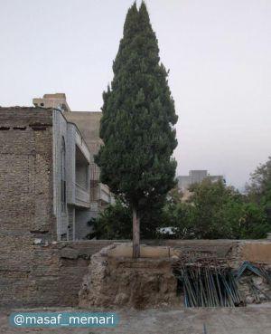 احساس مسئولیت شهروند سنندجی در حفاظت از محیط زیست و جلوگیری از قطع درخت سرو کهنسال هنگام ساختمان سازی!