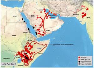 نقشه جهت حرکت گله های ملخ از شبه جزیره حجاز به سمت سواحل بوشهر و هرمزگان