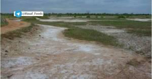 افزایش شدید شوری خاک به دلیل بالا بودن بسیار زیاد درصد املاح در سیلاب