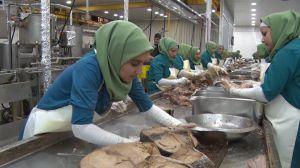 تعطیلی کارخانه های تن ماهی