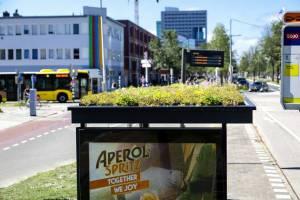 پرورش گل ناز روی سقف ایستگاه های اتوبوس برای حفظ گونه های در حال خطر زنبور عسل هلند