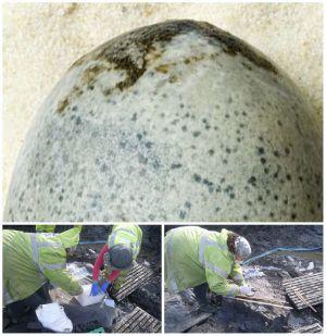 قدیمیترین تخم مرغ جهان کشف شد