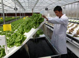 اقدامات توسعه و ساماندهی کشاورزی در روستاهای چین و جذب جمعیت در روستاها