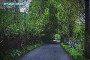درختان مثمر در ایران | پارک میوه جنگلی مشکین شهر | شهرسازی