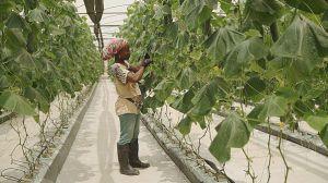 کشاورزی در آفریقا